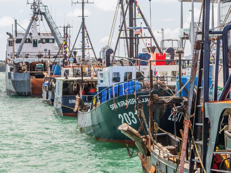 Large birds, large features lead to higher risk of fishing vessel bycatch