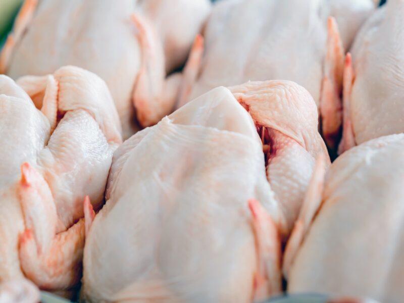 Salmonella detection prompts defence measures