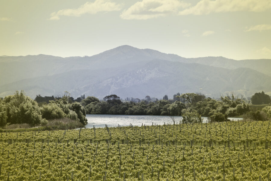Marlborough winery wins IWSC gold