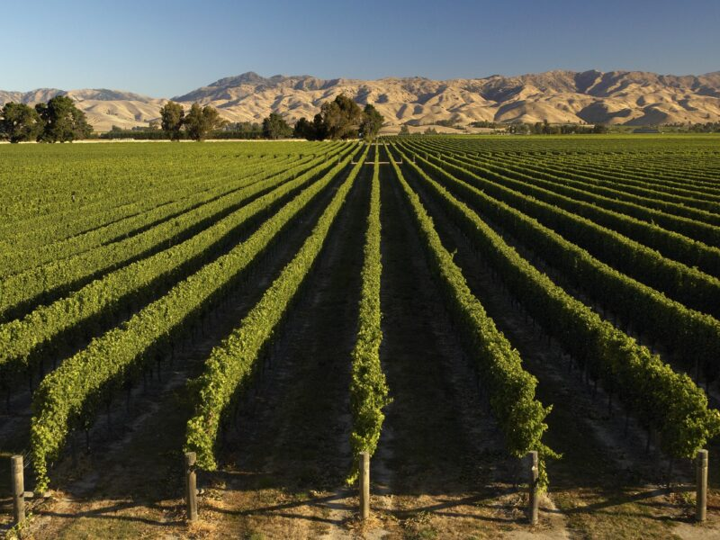 Marlborough approves $1.45m for wine trail