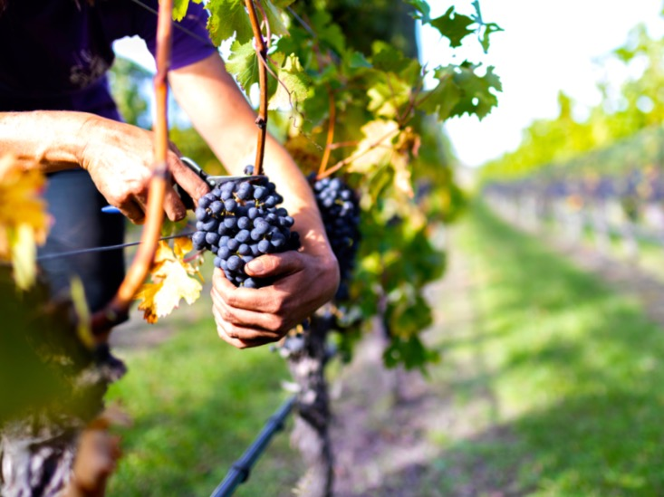 MPI launches wellbeing workshops for wine sector