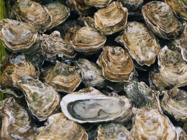 Rāhui to protect Bluff oysters from Foveaux Strait parasite