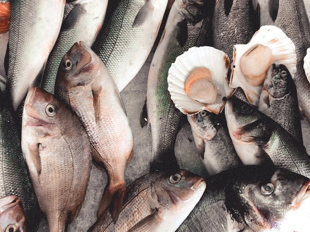 Fisheries NZ sets new catch limits, restricts shellfish harvesting