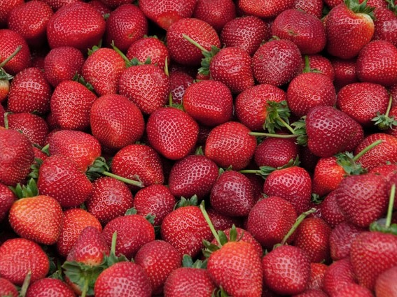 Strawberry industry hopes Kiwis will buy export excess
