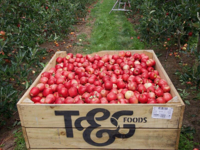 T&G Fresh branches out with charity launch
