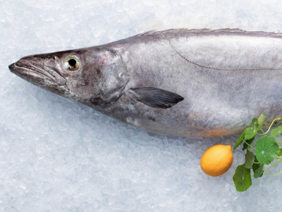 Seafood NZ likes new school of thought for pregnancy diets