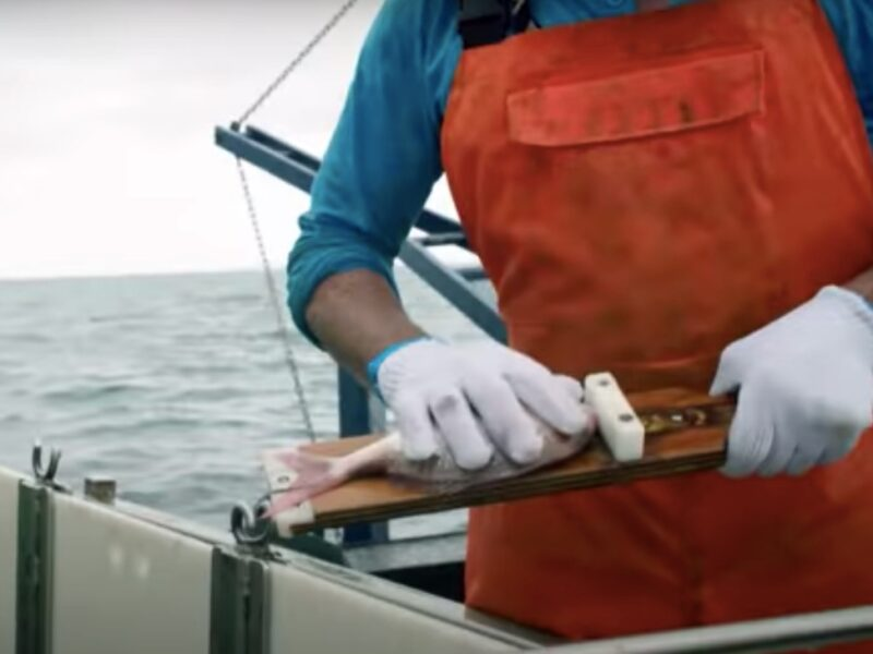 Seafood NZ casts net for Kiwi workers