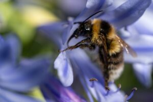Buzz gathers for Apiculture NZ conference