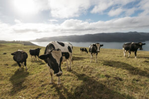 Farmer confidence at highest levels since 2018