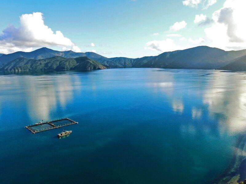 NZ salmon welfare in spotlight following Scottish investigation