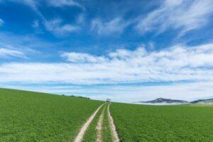 Top 25 chosen for Food, Fibre and Agritech Supernode Challenge