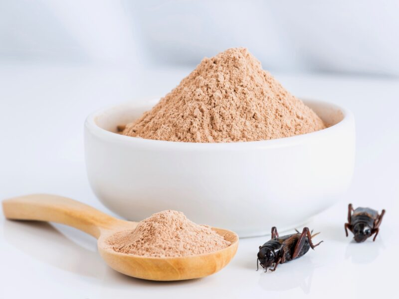 Insect protein sector investment creating demand buzz – report