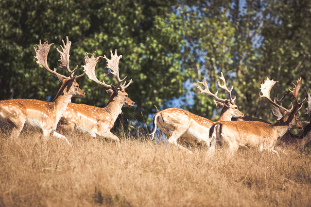Game Animal Council launches online resource to help hunters