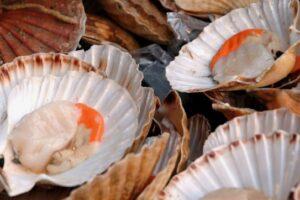 No scallops for popular scallop festival