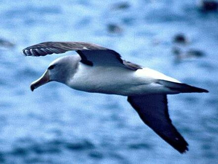 Fisherman fined $13k for not protecting seabirds