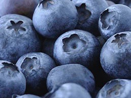 T&G to debut Australian blueberries in December