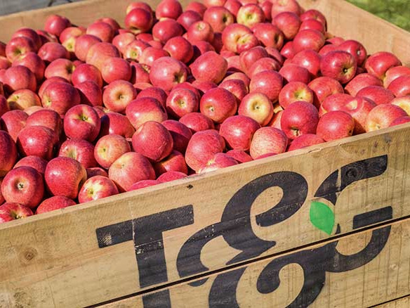 New T&G Envy orchard gets go-ahead