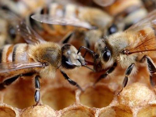 100k bee colonies lost in 2020 – survey