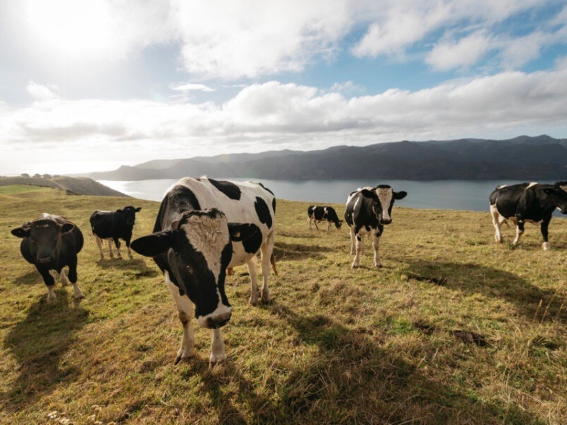 Perspectives: Food innovation needed now more than ever