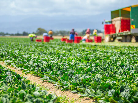 HortNZ welcomes council support for vegetable growing